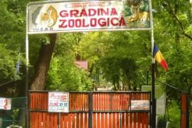 web_zoo_barlad