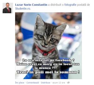 Senatorul de Strunga a dat în mintea... pisicilor