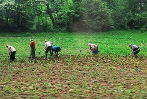 Ministrul Agriculturii pune sapele în cui